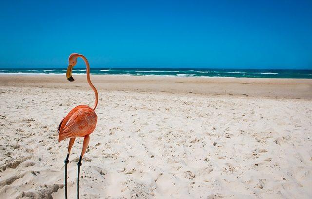 海辺のフラミンゴ