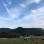 子供大喜び!牧場で秋のBBQ!!動物と自然に癒された日曜日を過ごしたよ!クーラーボックス買おうかな。