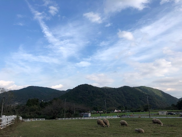 牧場 風景